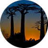 Sunset on les baobabs of Morondava, Madagascar