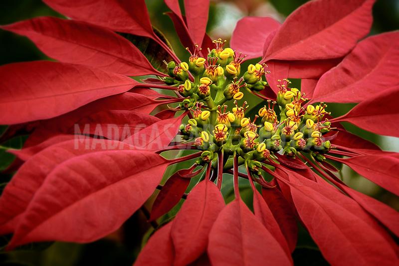 Madagascar En Photos The Flowers Of Madagascar